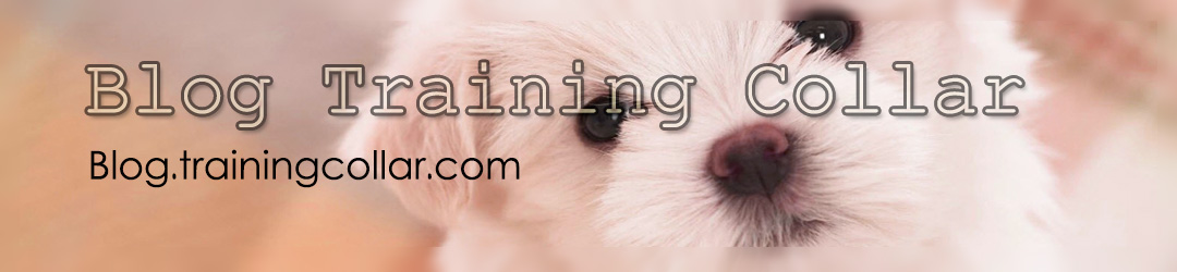 Blog Trainingcollar